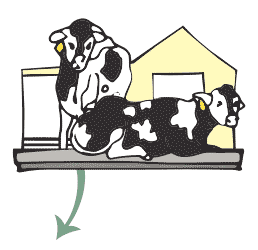 Butter-Step1cow