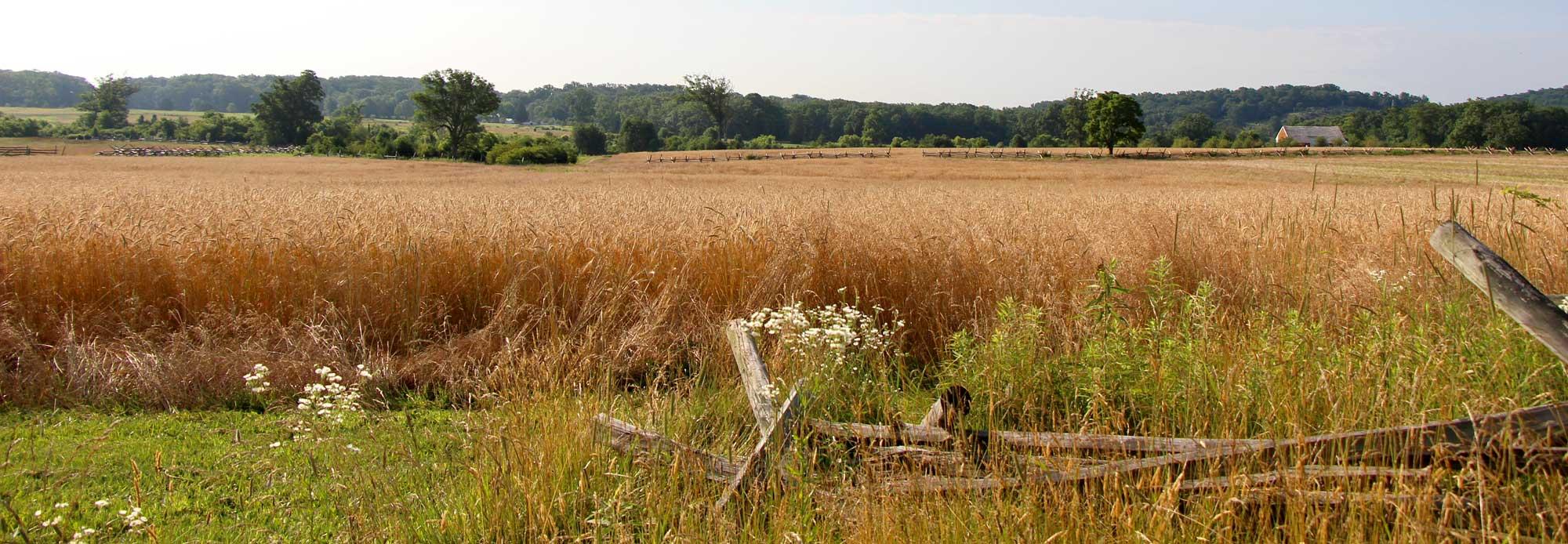 Gettysburg crop on PA battlefield