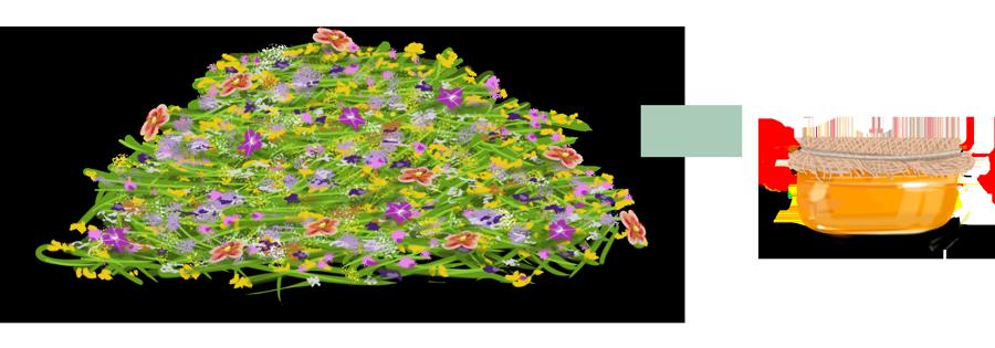 FlowerToHoney-900x315px