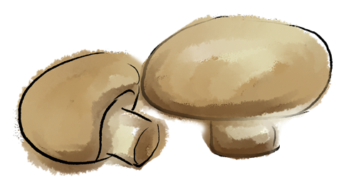 Mushrooms-500x2634px