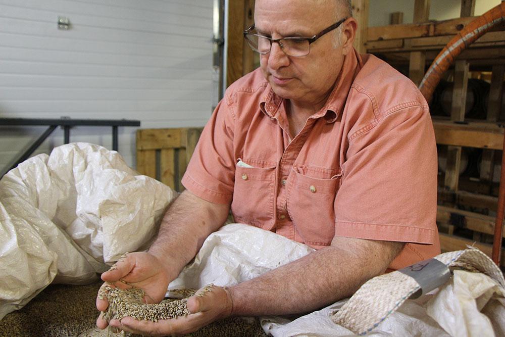 Mihalich rye grain